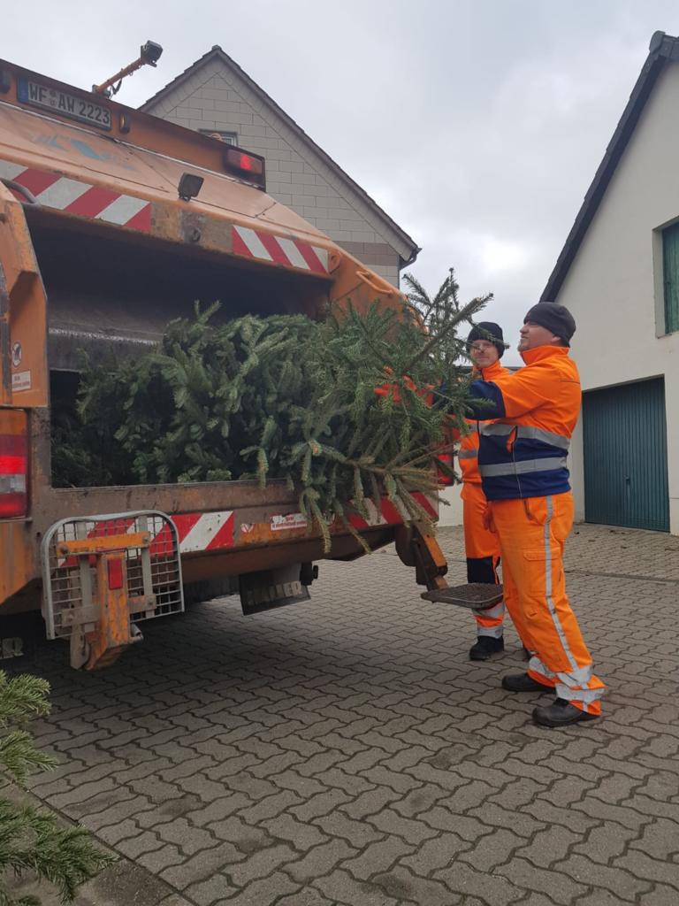 Abholung der Weihnachtsbäume
